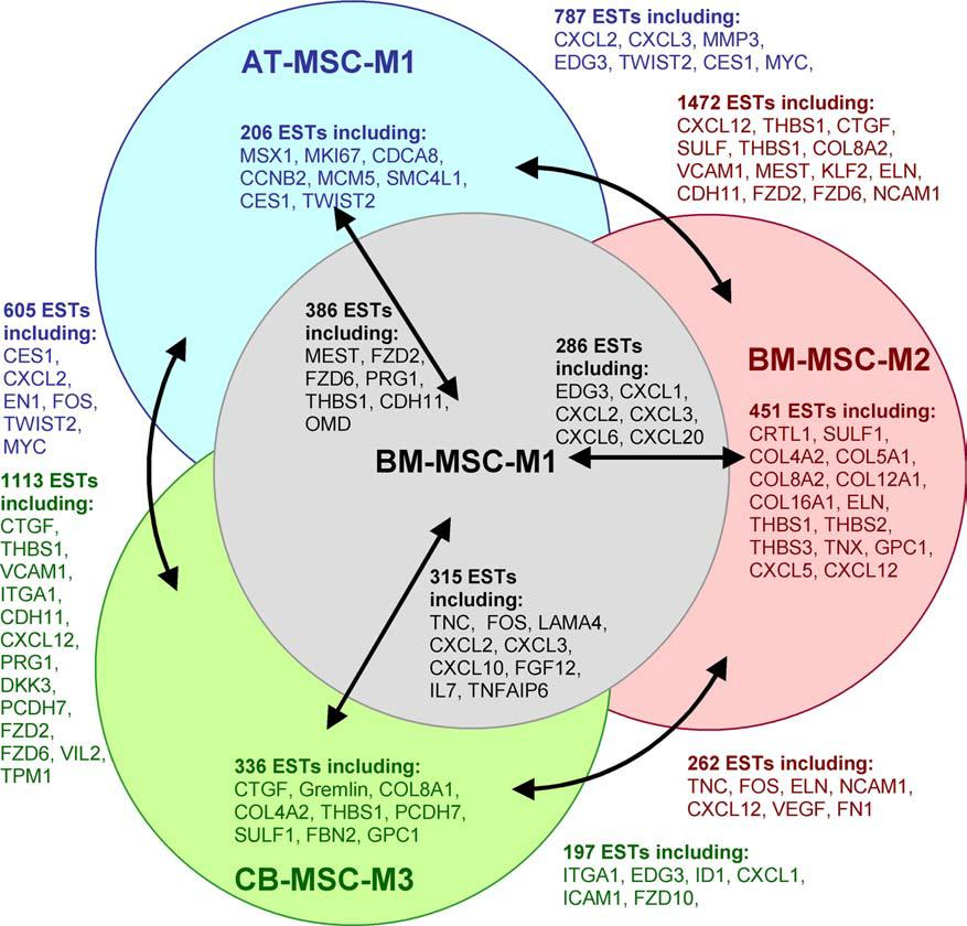 adult stem cells - mexico stem cell therapy diagram of msc